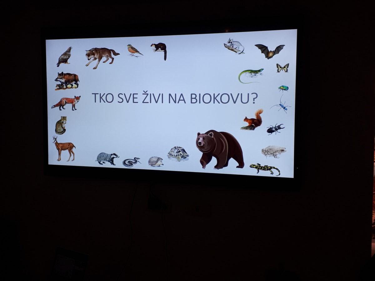 Skupina Jutro 2- Dupinčići, odgojiteljica: Milena Majić